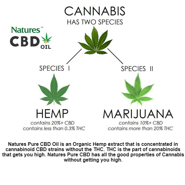 What's The Difference Between Hemp & Cannabis – SOL✿CBD
